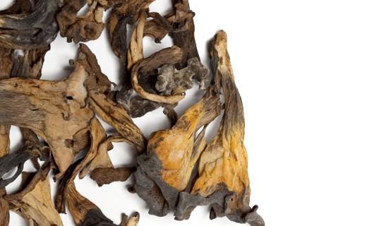 Trompetas de la Muerte Secas - La Maison du Champignon
